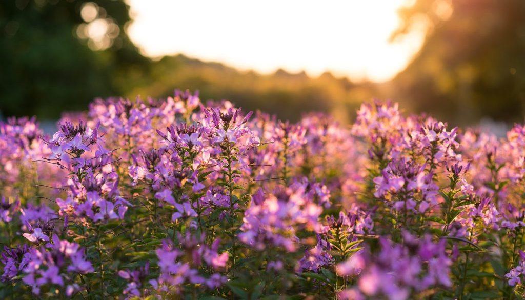 bloom-1850621_1920
